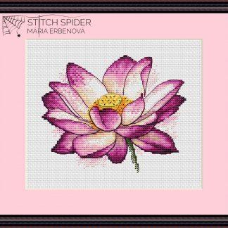 Ružový lotos v ráme