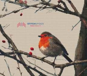 Vtáčik Robin - 100 farieb